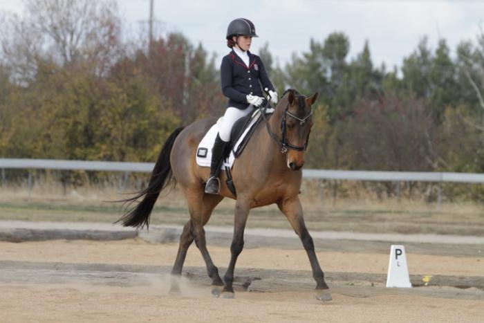 School Master Dressage/Eventer