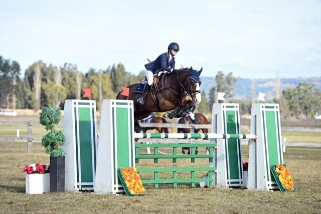Proven Junior Series Gelding