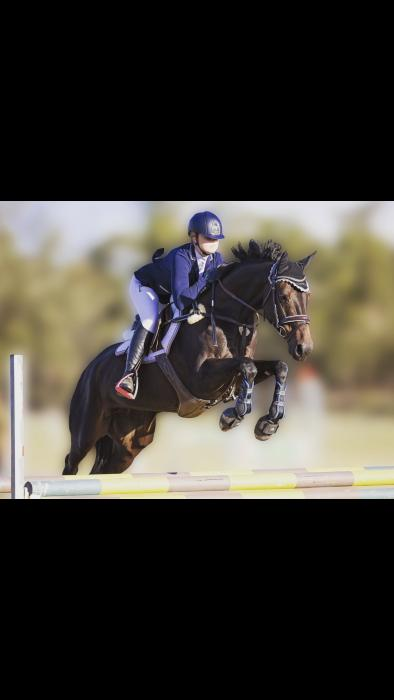 Gorgeous Talented Mare