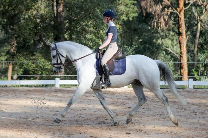 Stunning Eventer and Dressage Horse