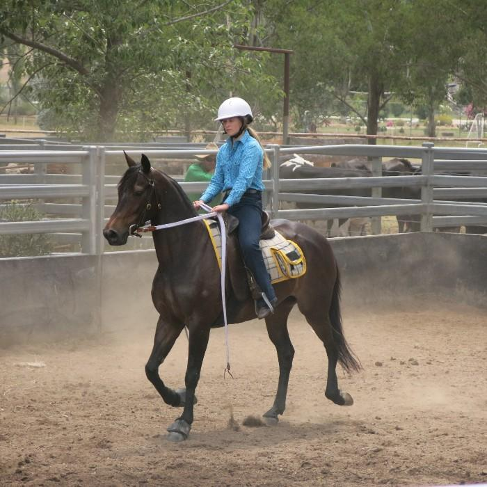 QUIET, ATHLETIC & COMPETITIVE FAMILY ASH MARE