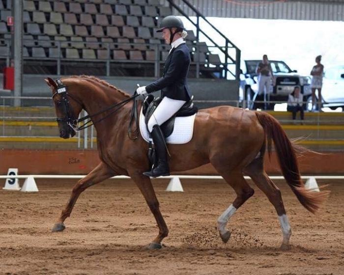 FEI Dressage Horse - PRICE REDUCED
