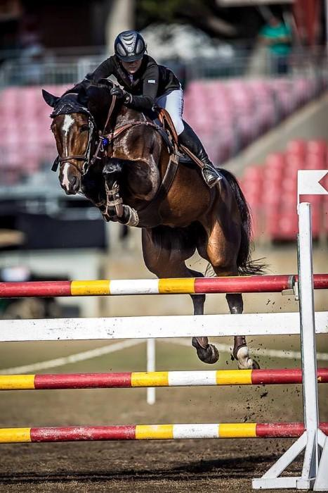 Extremely Successful and Talented Showjumping Mare