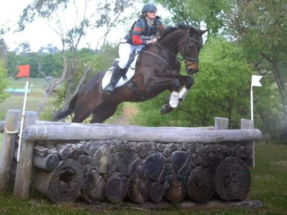 Talented 10yr old thoroughbred Eventer