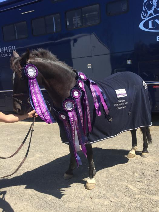 NSW's TOP Performance Pony, HIS ROYAL EMBLEM