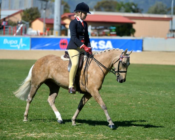 Beautifully Educated Performance Pony