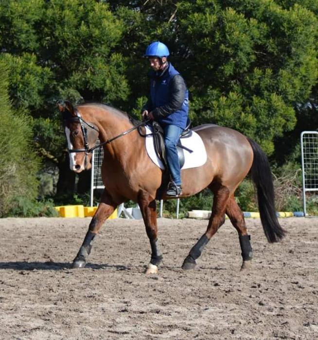 QH x Clydie Future Eventer bold and brave