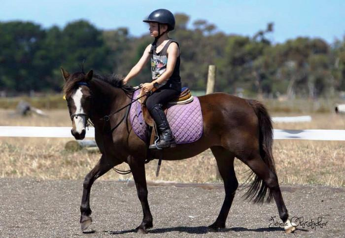 Horse Riding School For Sale