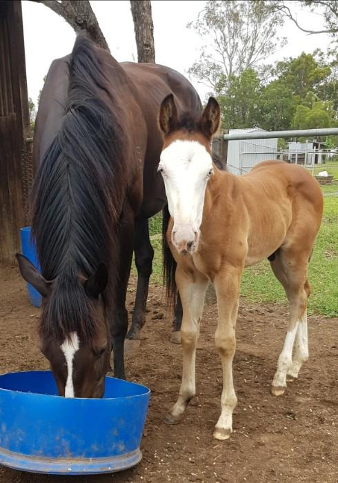 Paint weanling