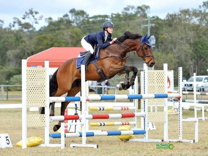 Super Interschool Gelding