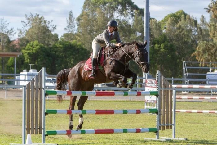 Showjumping School Master - Stockhorse