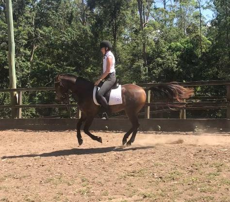 Talented and trainable gelding ready to compete!