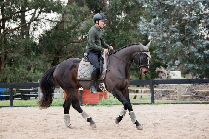 Elegant Thoroughbred Allrounder