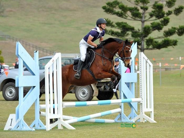 Dream Showjumping Mount