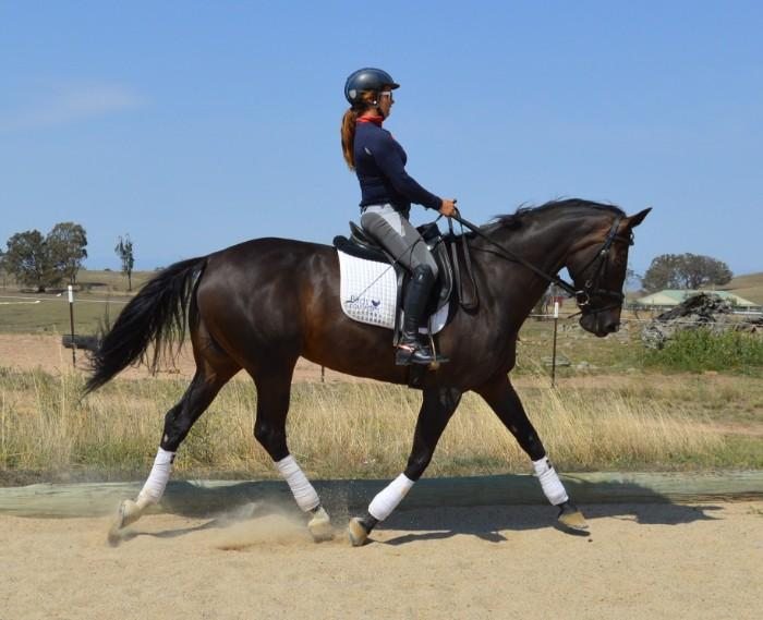 Winning 1 star eventer, medium dressage