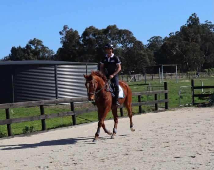 Off The Track Ready To Ride Gelding