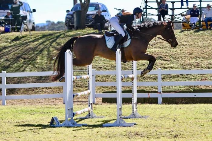 Reliable Showjumping Schoolmaster