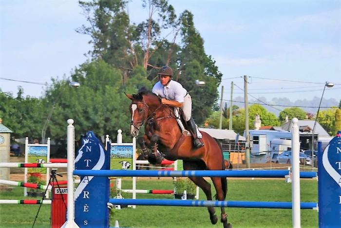 Talented well bred Showjumping Mare
