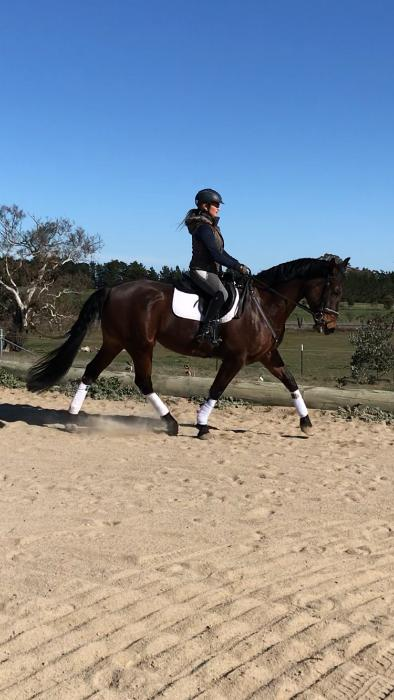 Dressage, SJ or eventer. Clever all round mare!!