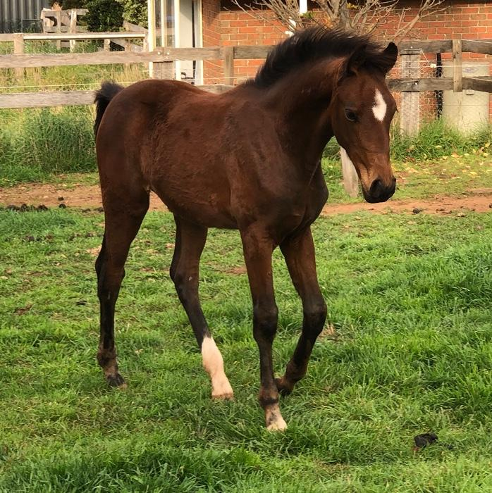 Exceptionally bred filly by His Highness