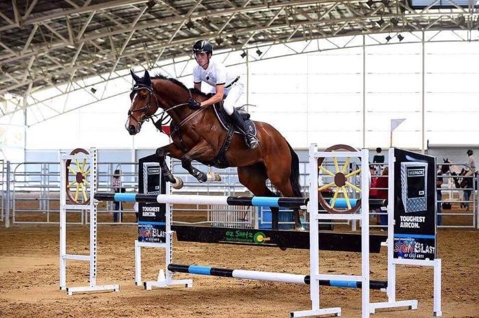 Safe, Reliable Showjumping Schoolmaster