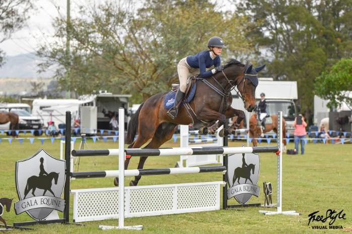 Eventing/Showjumping Mount