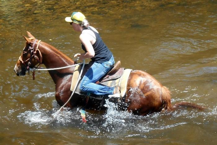 Pretty Red Aust Stock Mare + VIDEO++