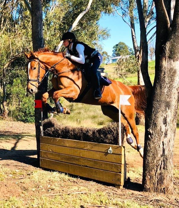 Talented & Easy Young Horse