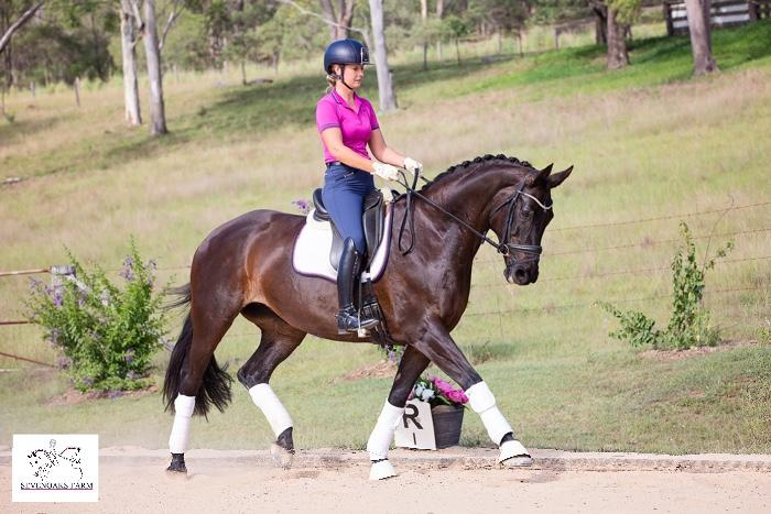 Stunning Mare - Dressage or Show