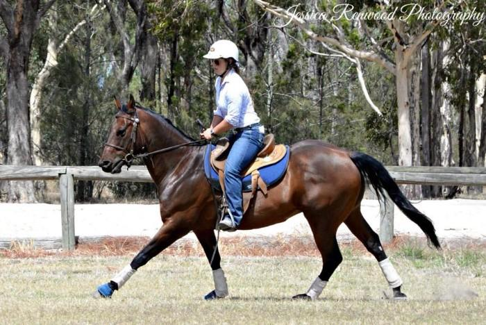 Quiet, competitive QH gelding