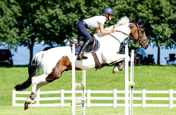 Superstar showjumping pony - The Comet