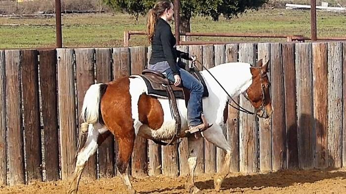 Lizzy - 14.0HH, 7 year old, Bay Paint Mare