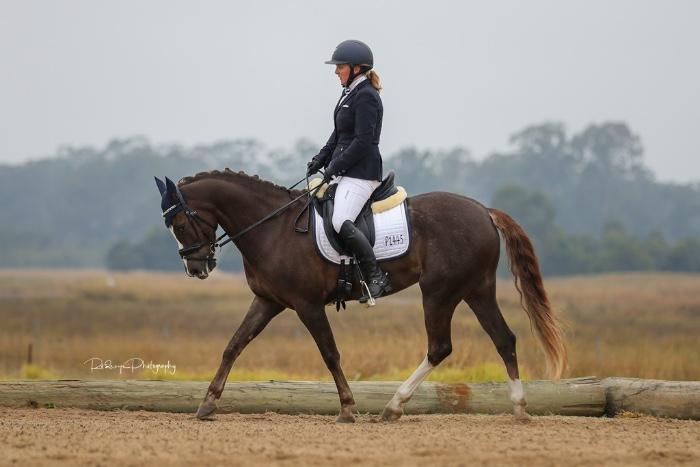 Dressage Or Show Pony