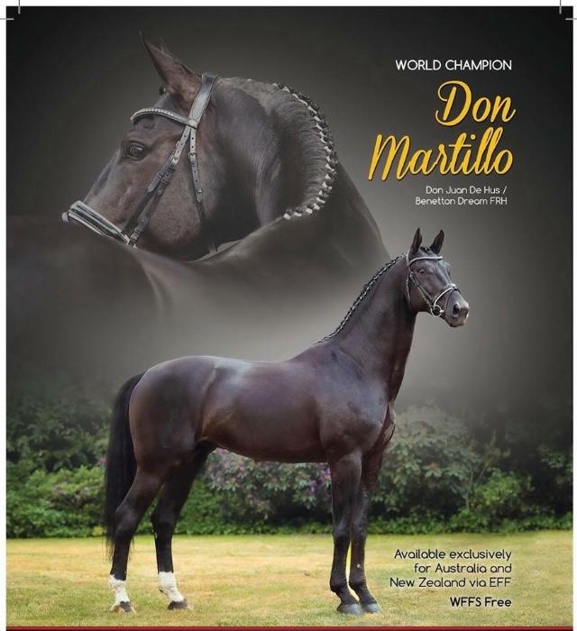 Don Martillo black colt For Sale