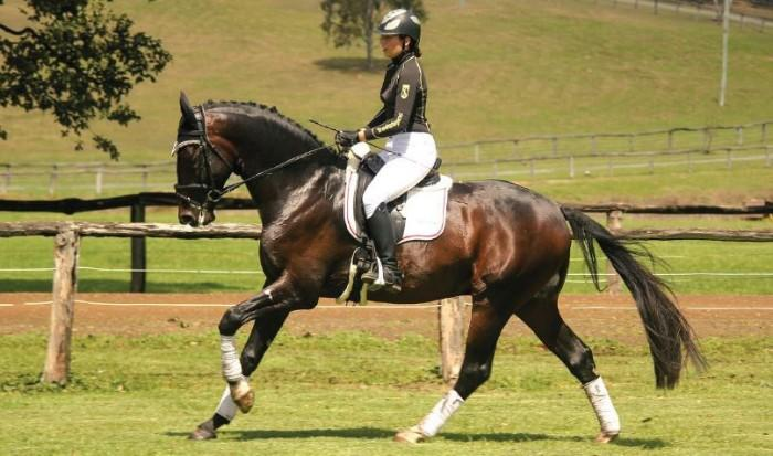 EQUITANA 2018 Auction - Doktor Royal (Dressage)