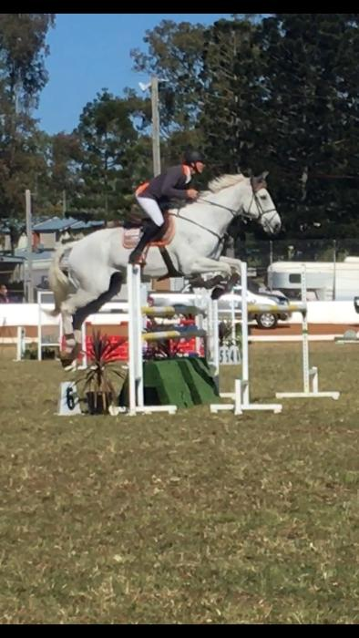 Talented Showjumper Junior Young Rider Amateur