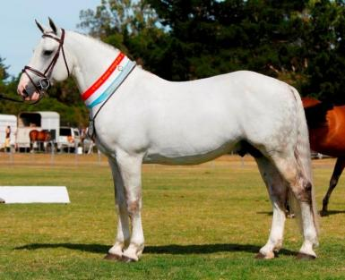 Sire: Baltydaniel Breeze RID (imp UK)