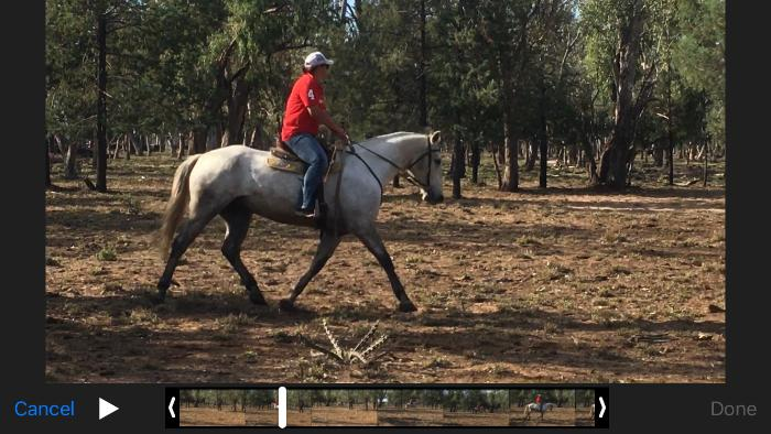 Handsome grey gelding