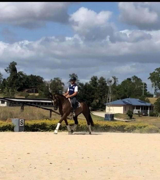 TALENTED AND TRAINABLE GELDING