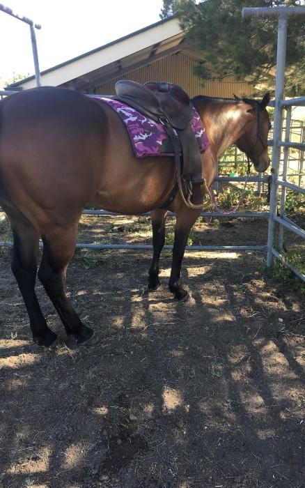 Friendly 10-year-old Registered QH Mare