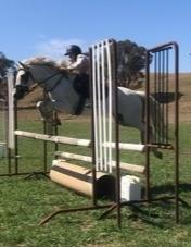 Talented 14.2hh Jumping Pony