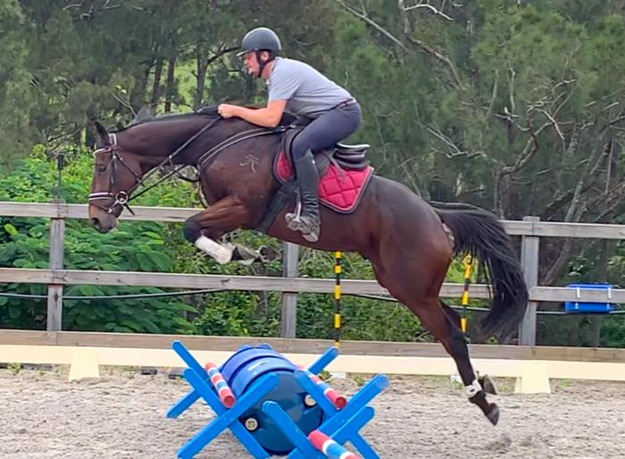 Quality quiet scopey TB- Eventing, SJ, Hacking