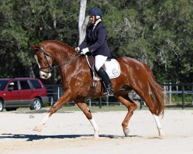 Courtland's Cadman by Casanova