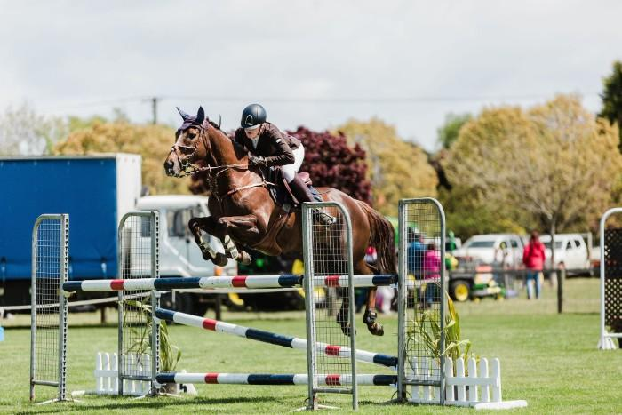 show jumper/ eventer