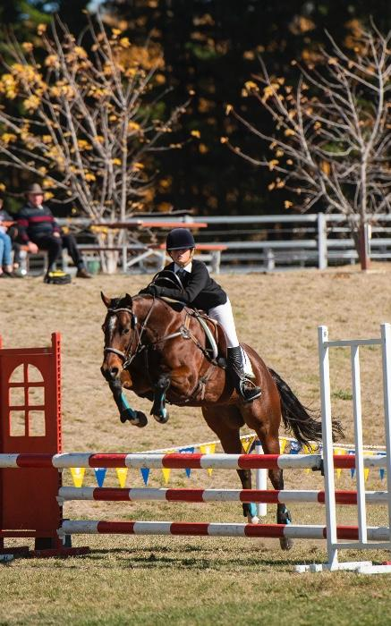 WANTED: Eventer / jumper /all-rounder