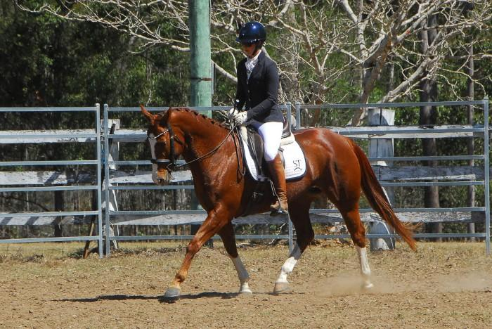 Western dressage or pleasure mare, cowy pedigree