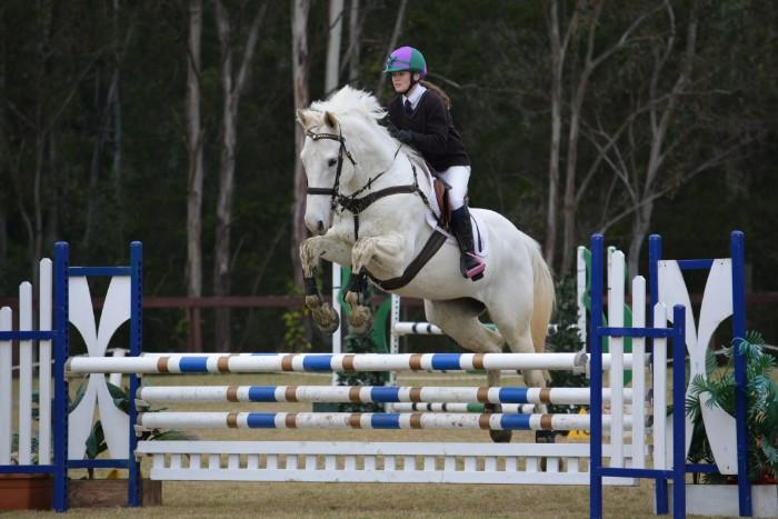 ⚡️Brilliant Safe Experienced  Showjumper ⚡�
