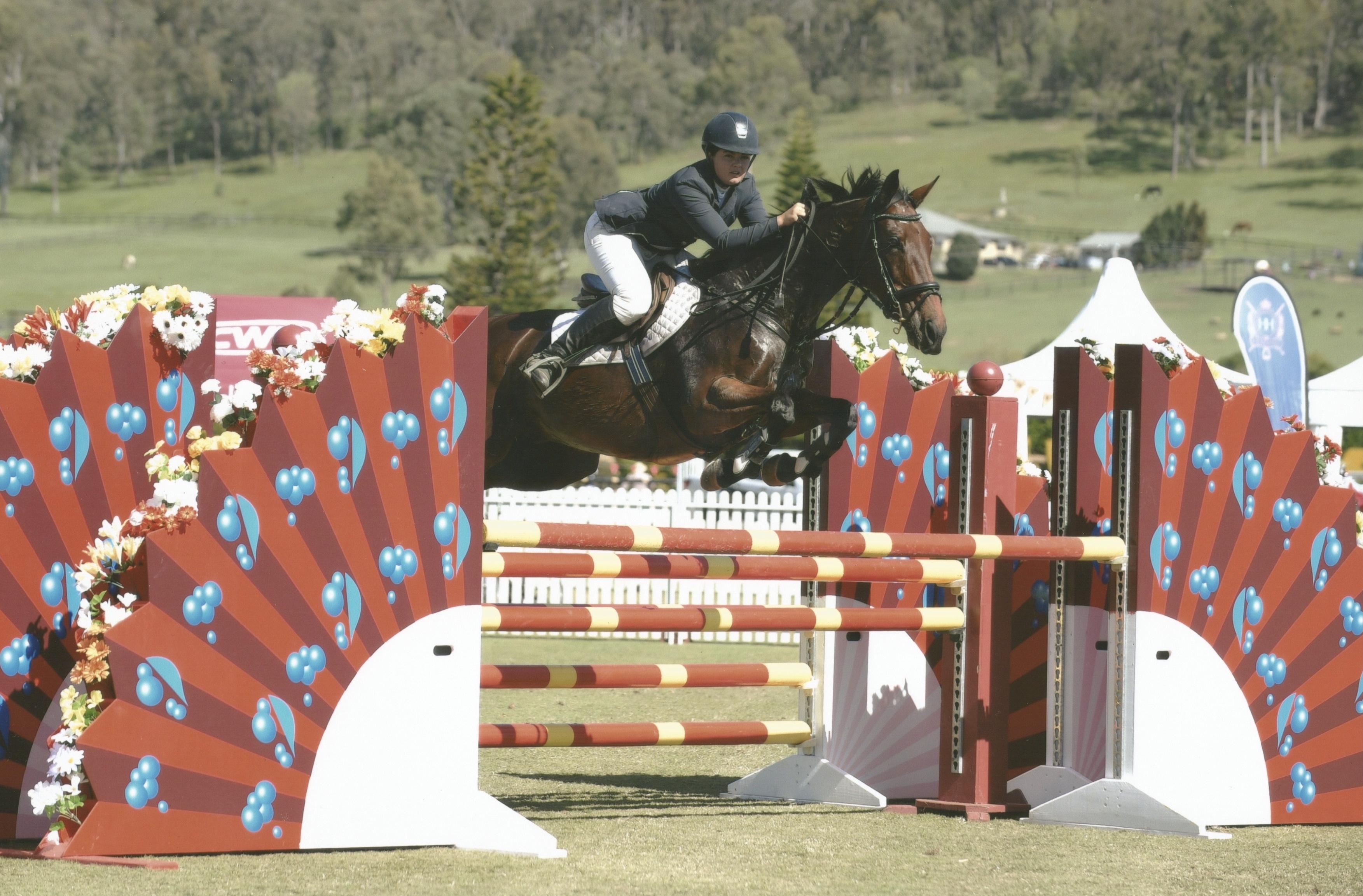 **Price reduced for quick sale** Showjumping schoolmaster