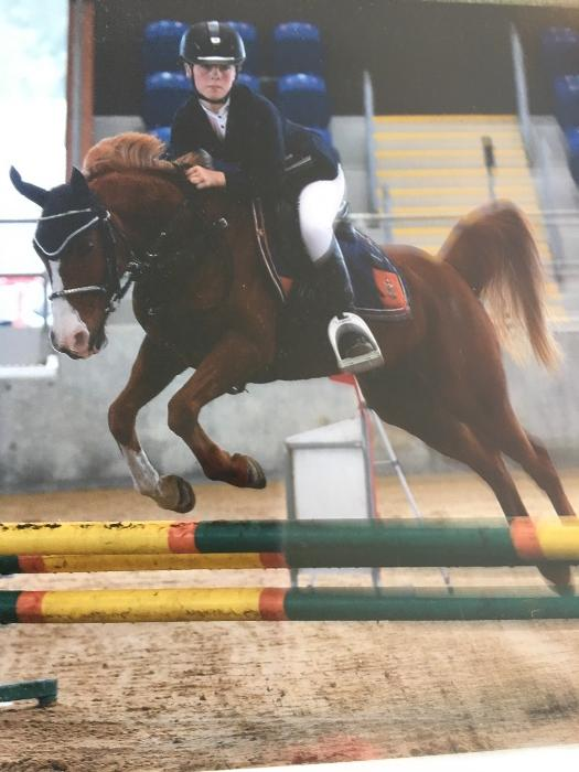 Talented Showjumping Pony  13.2