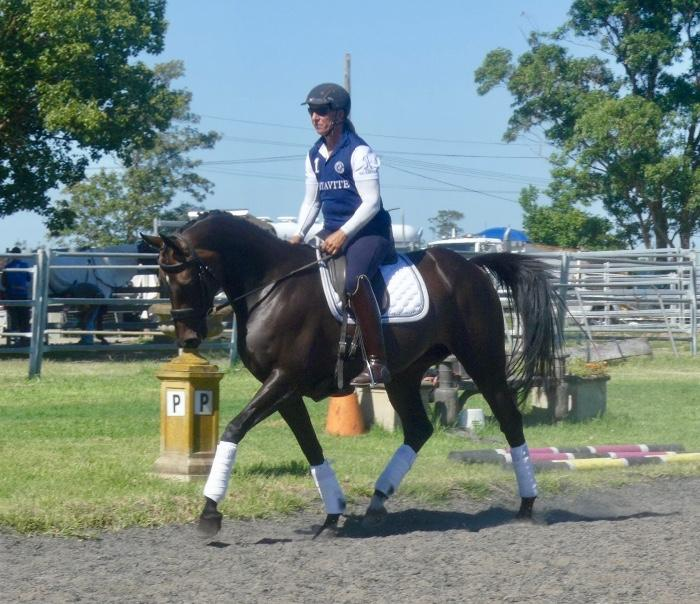 Potential eventer /dressage